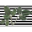 Full Bloom Leaf 062