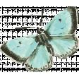 Peachy Keen Butterfly 1