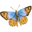 Peachy Keen Butterfly 2