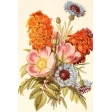 Seriously Floral Pocket Card 19 4x6