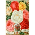 Seriously Floral Pocket Card 25 4x6