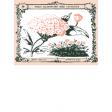 Wildflower Pocket Card 05 3x4