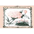 Wildflower Pocket Card 05 4x6