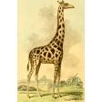 Ephemera African Animal 10