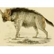 Ephemera African Animal 13