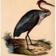 Ephemera African Birds 1