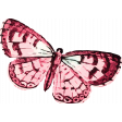 Seriously Butterfly 03 Illustration