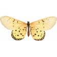 Seriously Butterfly 13 Illustration
