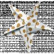 Digital Day Elements - Folded Star