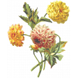 Seriously Floral 2 Illus - Floral 4
