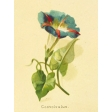 Seriously Floral #2 Pocket Cards Kit - JC 05