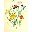 Seriously Floral #2 Pocket Cards Kit - JC 08