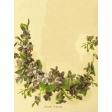 Seriously Floral #2 Pocket Cards Kit - JC 16