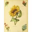 Seriously Floral #2 Pocket Cards Kit - JC 17