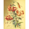 Seriously Floral #2 Pocket Cards Kit - JC 23