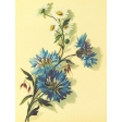 Seriously Floral #2 Pocket Cards Kit - JC 24