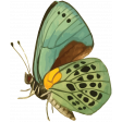 The Good Life: July Color Stamps - Butterfly 4