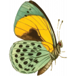 The Good Life: July Color Stamps - Butterfly 3
