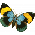 The Good Life: July Color Stamps - Butterfly 2