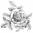 The Good Life July Elements - Print Rose White
