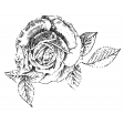 The Good Life July Elements - Print Rose Small White