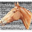 Go West Horses - Horse 9