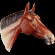 Go West Horses - Horse 8