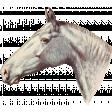 Go West Horses - Horse 6