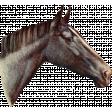 Go West Horses - Horse 5