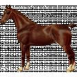 Go West Horses - Horse 4