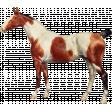 Go West Horses - Horse 3