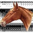 Go West Horses - Horse 2