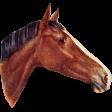 Go West Horses - Horse 1
