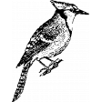 Birds In Snow Stamps - Blue Jay Stamp