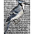 Birds In Snow Elements Kit #2: blue jay 1