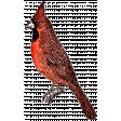 Birds In Snow Elements Kit #2: cardinal 2