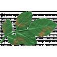 The Good Life: July 2020 Elements Kit Leaf 2