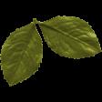 The Good Life: November 2020 Elements Kit - leaf 1