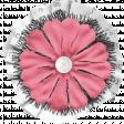 Summer Lovin_Flower-white black pink