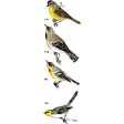 Bird Stamp 006 - Where Flowers Bloom Stamp