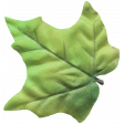 Leaf Green Silk - Our House Elements