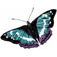 Winter Arabesque Butterfly - Teal