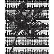 Leaf Stamp Set 001d
