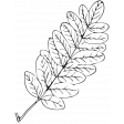 Leaf Stamp Set 001ss