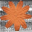 Oregonian Silk Flower - Orange