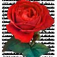 Be Bold Rose 2