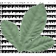 England Leaf 024