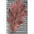 Thankful Harvest Leaf 1