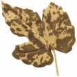 Thankful Harvest Leaf 3