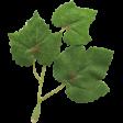 Festive Leaf 058